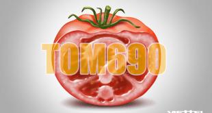 Gói TOM690 Viettel rất hấp dẫn, đăng ký ngay